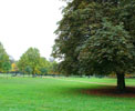 http://photosdelondres.com/grand-arbre-hyde-park
