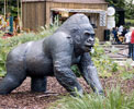http://en.wikipedia.org/wiki/File:Guy_the_Gorilla_statue.jpg