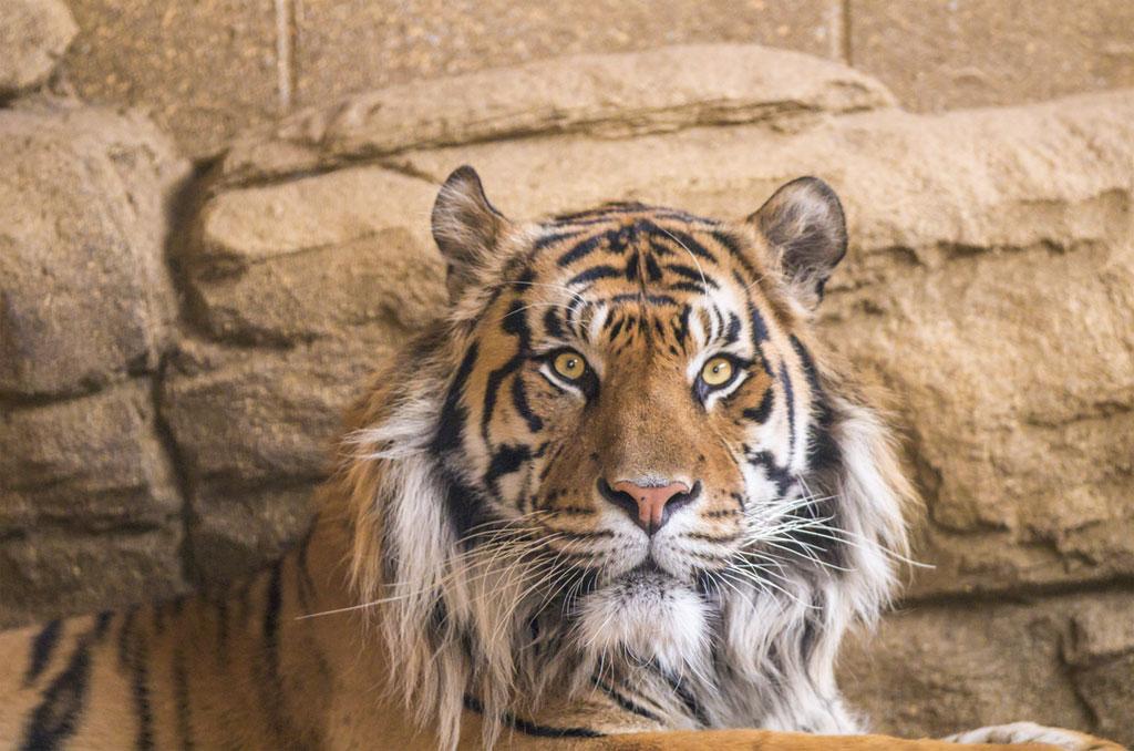 Visiter Le Zoo De Londres